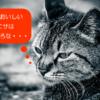 ねこ(おいしい話)